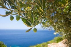 Returning to my… Olive Roots – From stocks & bonds to honey, oregano & olives